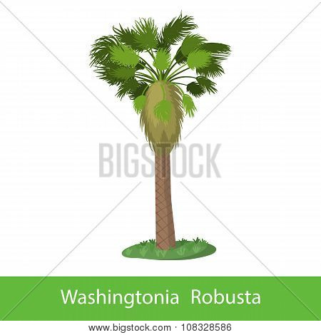 Washingtonia Robusta cartoon tree