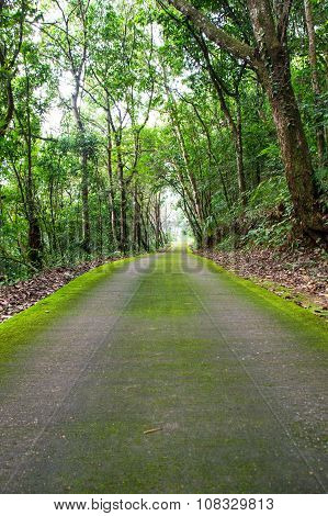 Green road and green tree in the forest