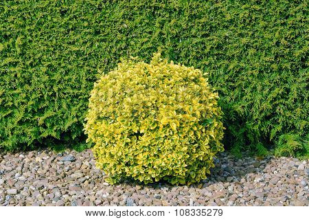 Round Shape Bush