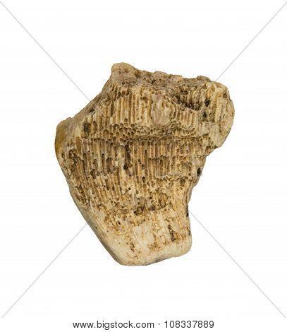 A piece of fossilized sea sponge