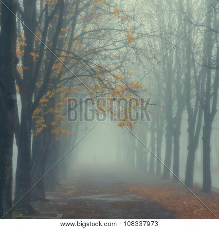 Misty Autumn Park