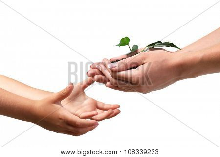 Female and child handfuls with soil and small green plant on light background
