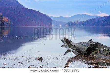 Driftwood Log Floating  In A Lake