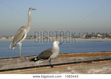 Crane And Seagull