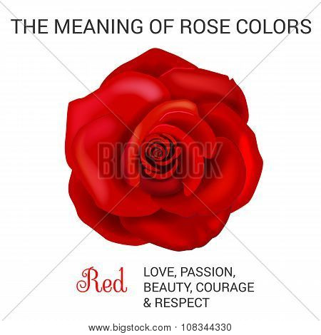 Red Rose Infographics
