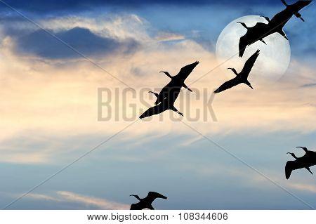 Birds Silhouette Moon