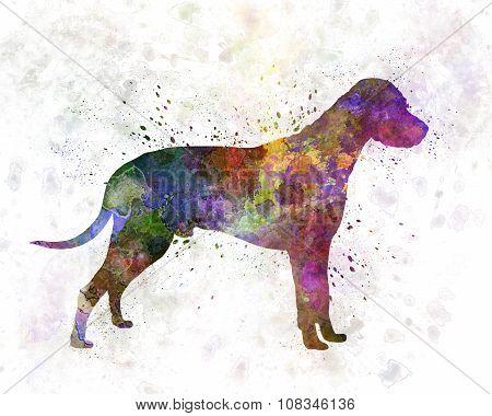 Dalmatian 01 In Watercolor