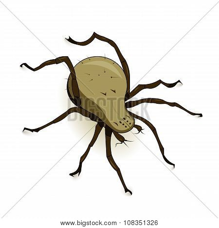 Vector Dust Mite Parasite