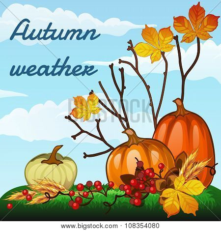 Autumn weather, harvest pumpkins and withering leaves