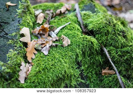 Autumn Leafs And Moss