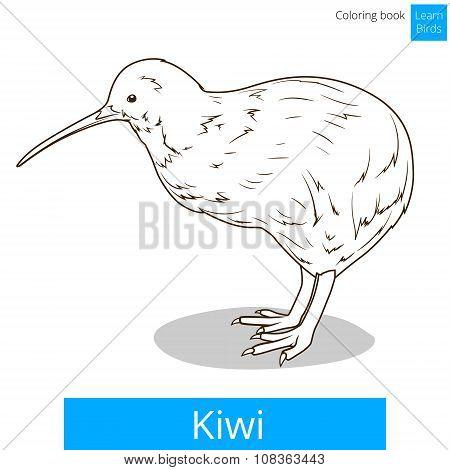 Kiwi learn birds coloring book vector