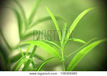 Macrophotography of yellow-green forest plant on green background with shadow