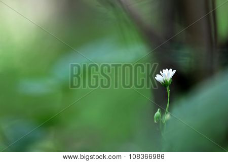 Macrophotography of single green-white flower on the green and brown blurred background