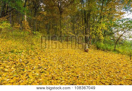 Beautiful Wild Autumnal Forest With Small Stream