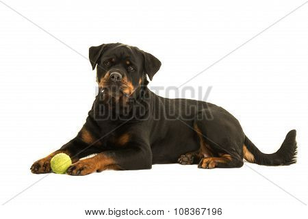 Lying down rottweiler dog with ball