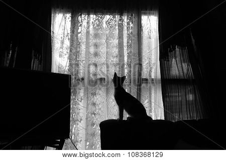 Kitty silhouette