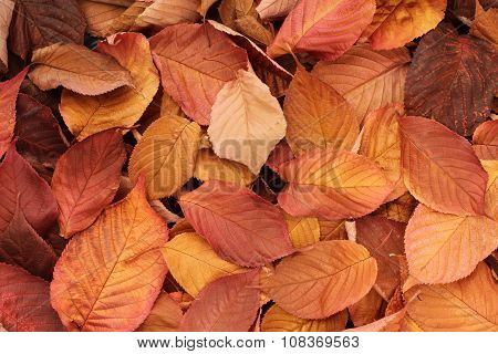 Autumn leaves background - dried orange, yellow, brown leaves