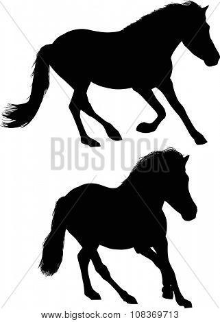 illustration with two horses isolated on white background