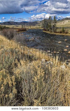 Dry Grass By The Salmon River.