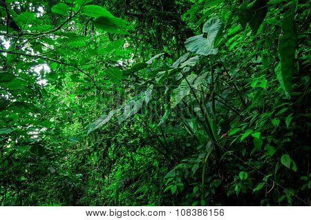 Amazon Rainforest National Park Yasuni South America