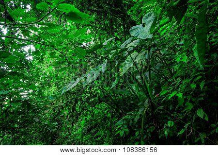 Amazon Rainforest National Park Yasuni South America