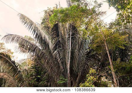 Amazon Rainforest, Lungs Of Our Planet, Ecuador