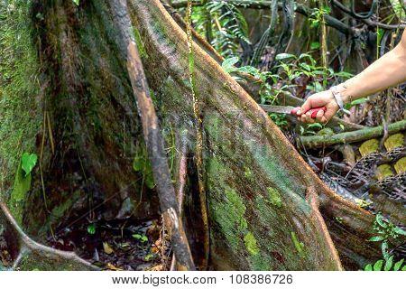 Deforestation, Tropical Rainforest