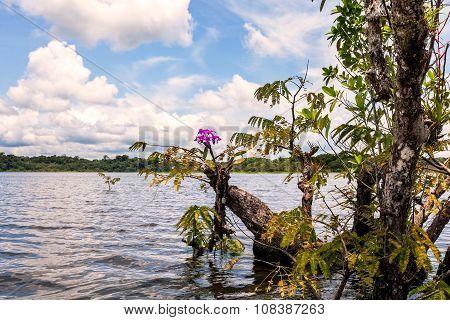 Cuyabeno Wildlife Reserve, Mangrove Trees