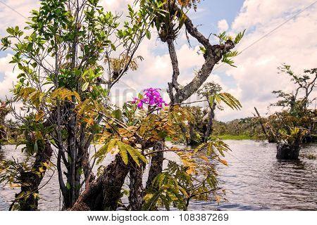 Laguna Grande, Mangrove Trees