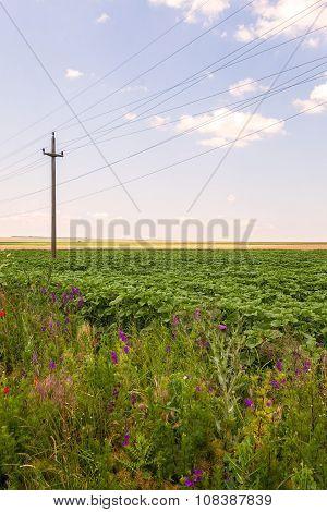 Agriculture In Romania