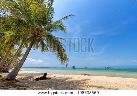 Coconut tree on the sea Phu Quoc, Vietnam