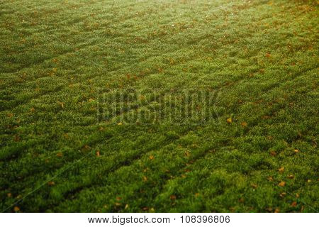 green lawn textured background