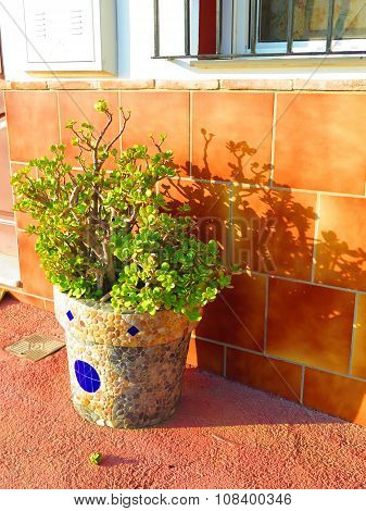 Mosaic Covered Flowerpot