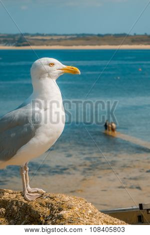 Seagull on the seaside