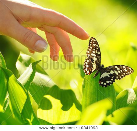 Human hand and a beautiful butterfly