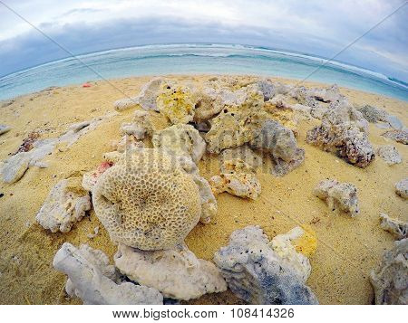 Dead corals on the beach. Devastated coast on Reunion Island in Indian Ocean.