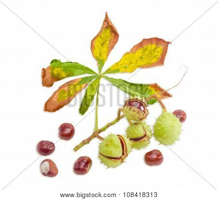 Branch With Horse Chestnuts On A Light Background