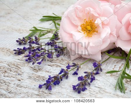 Pale Pink Roses And Provence Lavender Bouquet