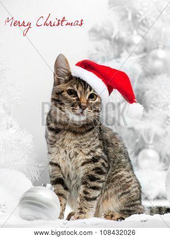 Christmas cat at red santa's hat  near christmas tree