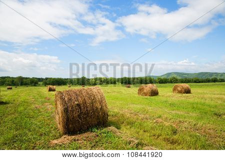 Haystacks in rolls lie on the sloping meadow fields. Far East, Russia.