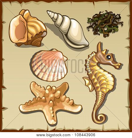 Decor of seashells and seaweed, six icons