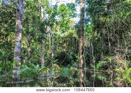 Flooded Trees In The Amazon Rainforest, Manaos, Brazil