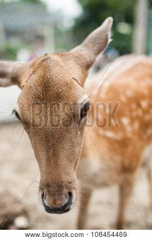A small deer close up on a background of sand