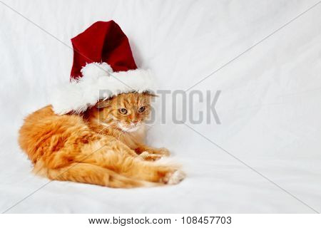 Angry Ginger Cat  In Red Christmas Hat Lies On Bed. The Fluffy Pet Comfortably Settled To Sleep.