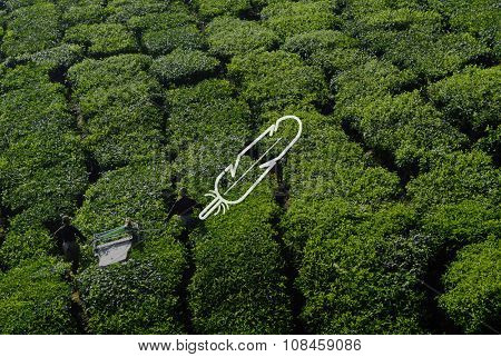 Tea Harvest Farming Agriculture Nature Concept