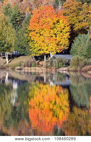 Bright Tree Reflected In A Calm Lake