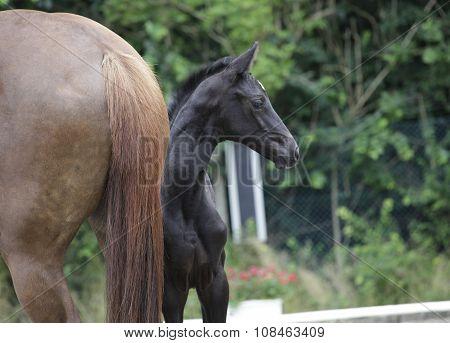 Foal Looks