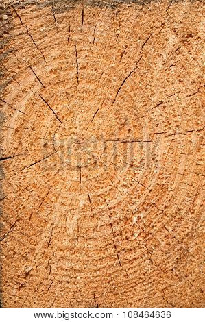 Structure of the Wood Board of Pine. Texture Tree Background.
