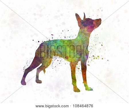 Xoloitzcuintle In Watercolor