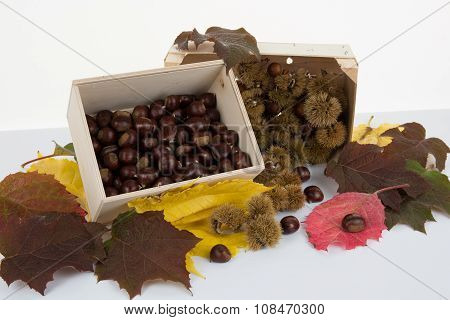 Bunch Of Horse Chestnuts Isolated On White Background